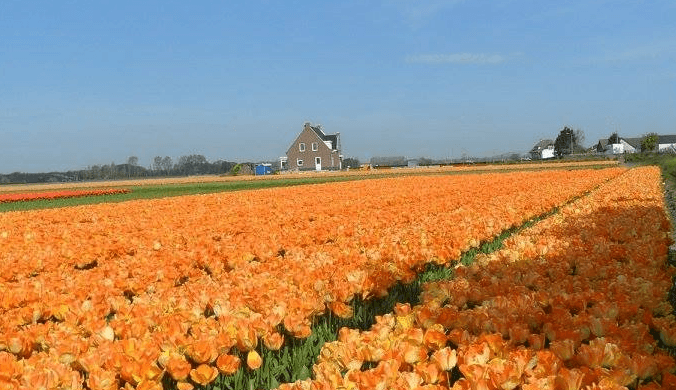 private_guide_holland