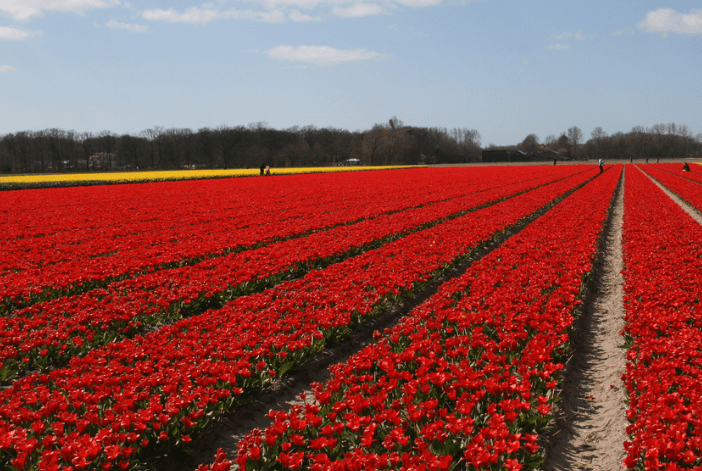 keukenhof_private_tour